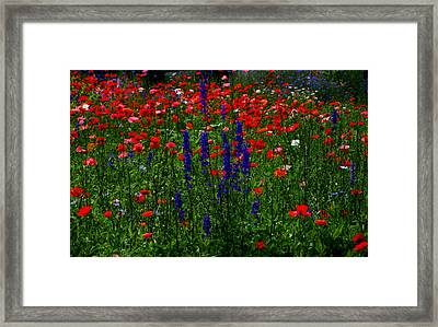 Red And Blue Wildflowers And Poppies Framed Print by Martin Morehead