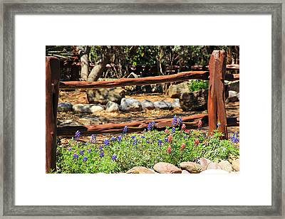 Red And Bluebonnets Framed Print