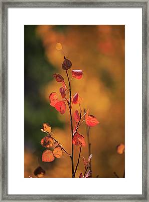 Framed Print featuring the photograph Red And Gold by David Chandler