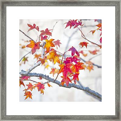 Red And Gold Leaves Abstract Framed Print