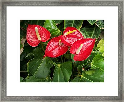 Red And Green Framed Print by Constance Drescher