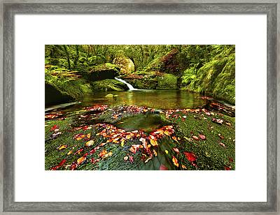 Red And Green Framed Print by Jorge Maia