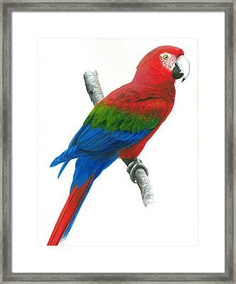 Red And Green Macaw Framed Print by Christopher Cox