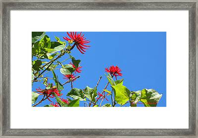 Red And Green San Diego Flowers Framed Print by Doreen Whitelock