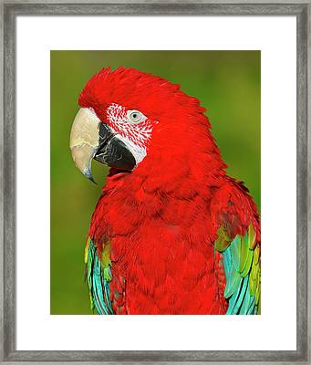 Framed Print featuring the photograph Red And Green by Tony Beck