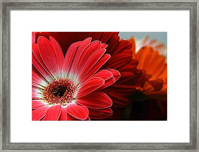 Red And Orange Florals Framed Print by Clayton Bruster