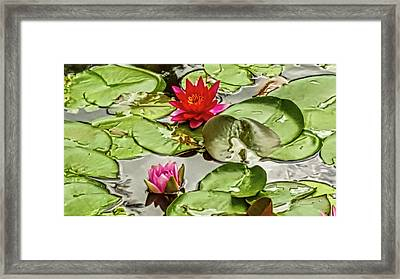 Red And Pink Water Lilly Framed Print by Art Spectrum