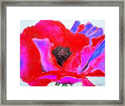 Red And Purple Poppy Framed Print