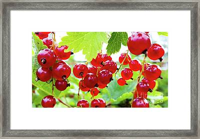 Red And Ripe Framed Print