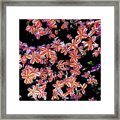 Red And White Flowers Framed Print