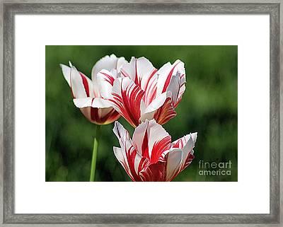 Red And White Stripes Framed Print