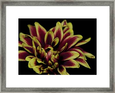 Red And Yellow 2 Framed Print by Sheryl Thomas