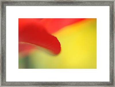 Red And Yellow Framed Print by Catherine Lau