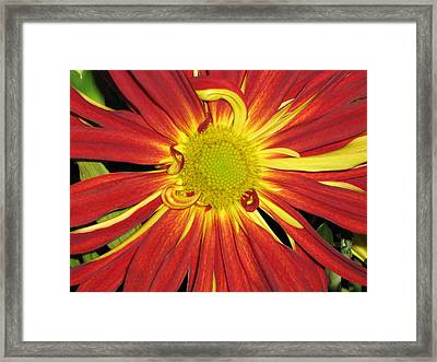 Red And Yellow Flower Framed Print