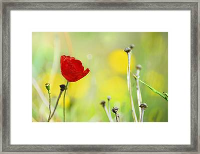 Red And Yellow Framed Print by Guido Montanes Castillo