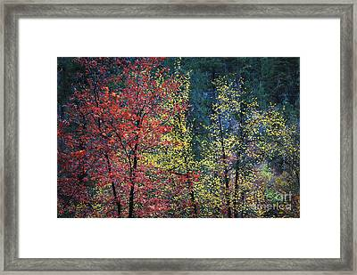 Red And Yellow Leaves Abstract Horizontal Number 1 Framed Print by Heather Kirk