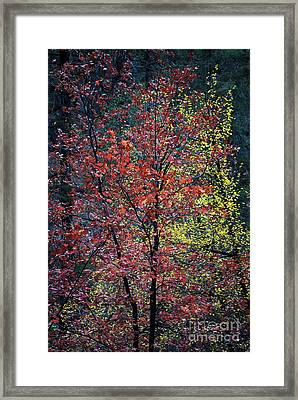 Red And Yellow Leaves Abstract Vertical Number 1 Framed Print by Heather Kirk
