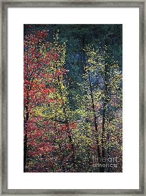 Red And Yellow Leaves Abstract Vertical Number 2 Framed Print by Heather Kirk