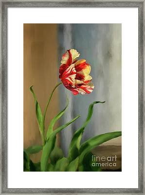 Red And Yellow Parrot Tulip Framed Print by Lois Bryan