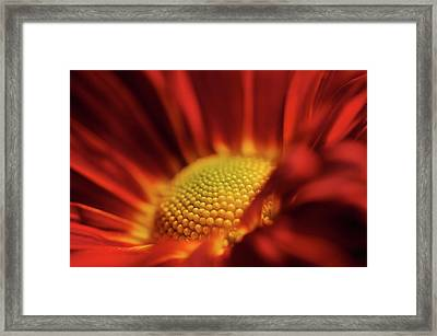 Red And Yellow Framed Print by Sheryl Thomas