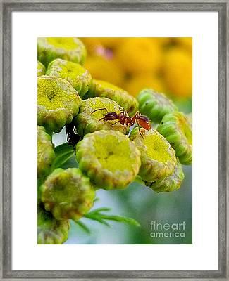 Red Ant Framed Print