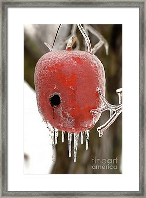 Framed Print featuring the photograph Red Apple Birdhouse by Michael Flood