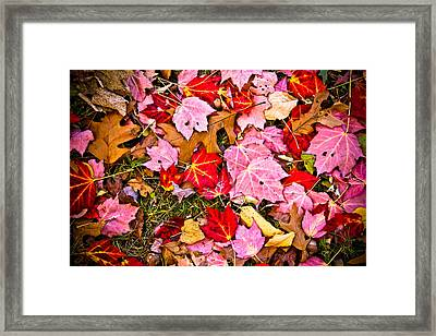 Red Autumn Leaves Framed Print by Colleen Kammerer