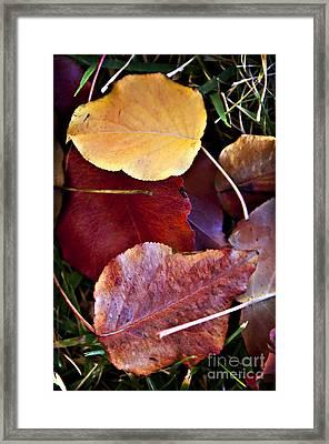 Red Autumn Leaves Framed Print