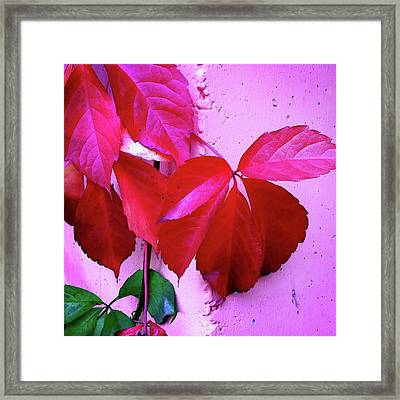 Red Autumnal Leaves And Purple Wall Framed Print