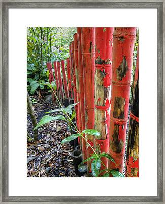 Red Bamboo Framed Print by Dolly Sanchez