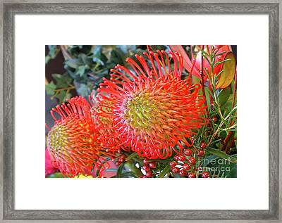 Red Banksia Garden By Kaye Menner Framed Print by Kaye Menner