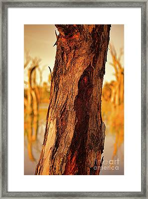 Framed Print featuring the photograph Red Bark by Douglas Barnard