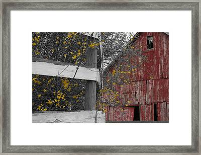 Red Barn And Forsythia Framed Print