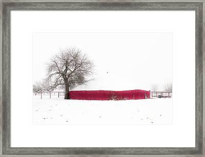 Red Barn In Winter Framed Print by Tamyra Ayles