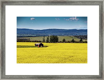 Red Barns In A Sea Of Canola Framed Print