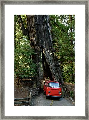 Red Bay Window Bus Drives Through A Tree Framed Print by Richard Kimbrough
