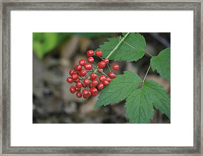 Red Bead Framed Print by Alan Rutherford