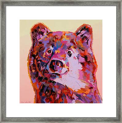 Red Bear Framed Print by Bob Coonts