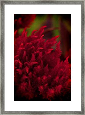 Framed Print featuring the photograph Red Beauty by Cherie Duran