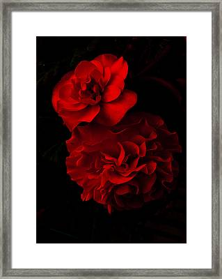 Red Begonia Framed Print