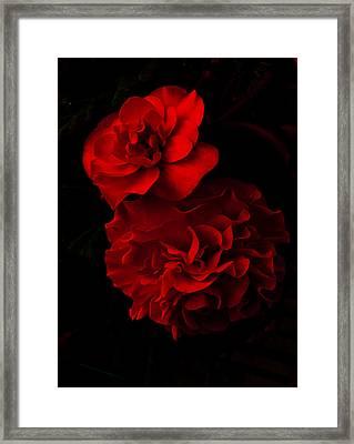 Red Begonia Framed Print by Lynn Hughes