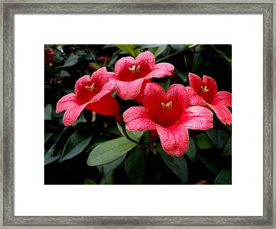 Red Bell Flowers Framed Print by Rosalie Scanlon
