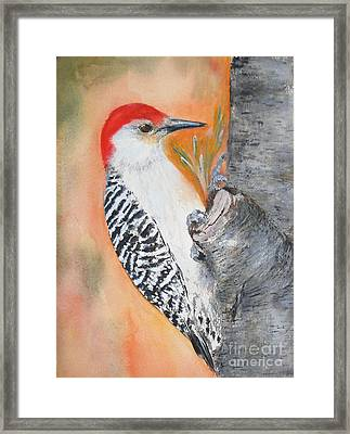 Red Bellied Male Woodpecker Framed Print by Sibby S