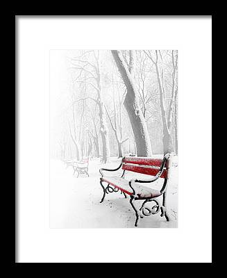 Winter Forest Framed Prints