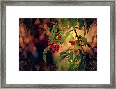 Red Berries At Sunset Framed Print by Theresa Campbell