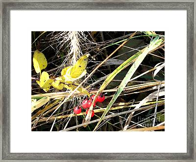 Red Berries Framed Print by Gary Everson