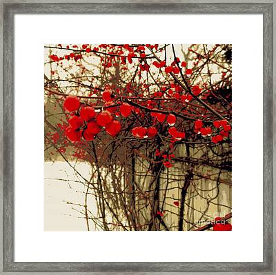 Red Berries In Winter Framed Print by Susan Lafleur