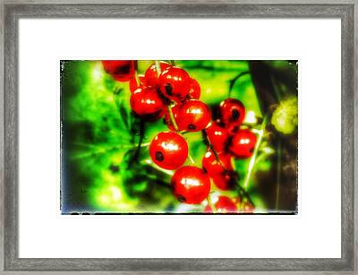 Framed Print featuring the photograph Red Berries by Isabella F Abbie Shores FRSA