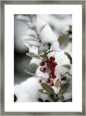 Red Berries Framed Print by Jill Smith