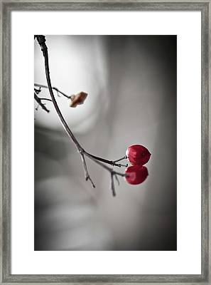 Red Berries Framed Print by Mandy Tabatt